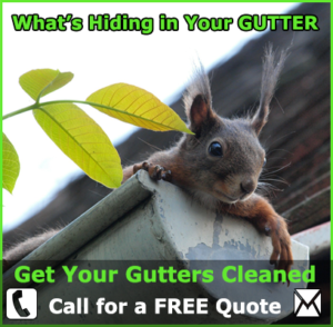 Whats Hiding in your Gutter?